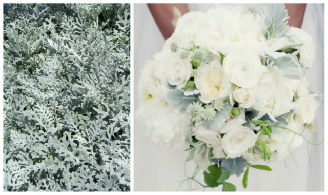 dusty miller bouquet