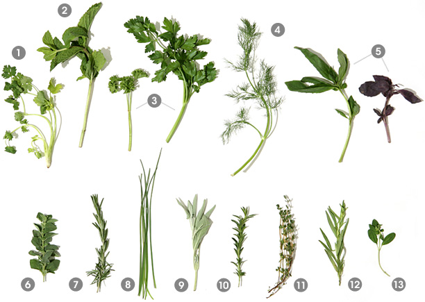 herbs_main_image